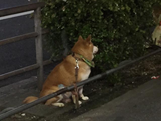 主人の帰りを待つ名古屋の犬